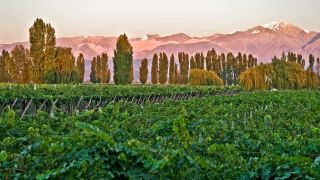 Chef Bob Waggoner Argentina Tour - Cavas Wine Vineyards